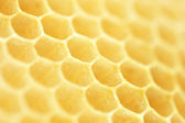 Honeycomb. Shallow DOF — Stock Photo