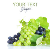 Grapes Border. Isolated On White — Stock Photo