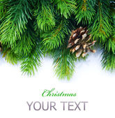 Christmas Fir Tree Border — Stock Photo