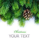 Weihnachten tanne baum grenze — Stockfoto