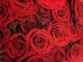 Red Roses Background — Foto de Stock