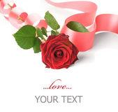 Róża — Zdjęcie stockowe