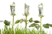 Financial Growth. Conceptual Image — Stock Photo