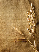 Wheat Ears on Burlap background. Country Style. With copy-space — Stock Photo