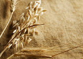 Wheat Ears border on Burlap background. with copy-space — Stock Photo