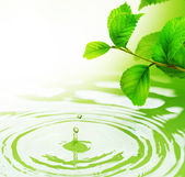 Green Leaves and Water — Stock Photo