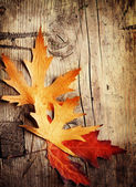 Las hojas de otoño sobre fondo de madera — Foto de Stock