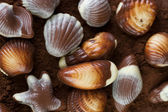 Chocolate Seashells Background — Stock Photo