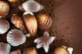Chocolate Seashells Border — Stock Photo