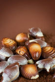 Chocolate Seashells Border — Stock Photo
