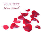 Rose Petals Border. Isolated on white — Stock Photo