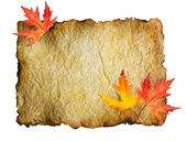 Autumn Leaves on the Old Paper sheet isolated on white — Stock Photo