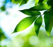绿色 leaves.nature — 图库照片