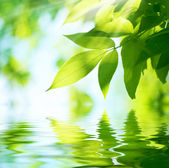 Green Leaves.Nature background — Stock Photo