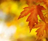 Fall. Autumn — Stock Photo