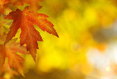Fall.Autumn Background — Stock Photo