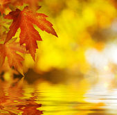 Fall.Autumn Background — 图库照片