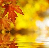 Fall.autumn pozadí — Stock fotografie