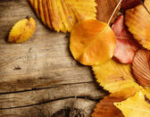 Autumn Leaves over wood background. With copy space — Stock Photo