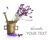 Lavender Cosmetics Concept — Stock Photo