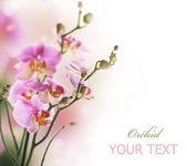 Orchid Border — Stock Photo