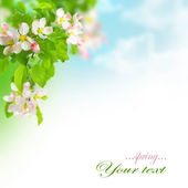 Spring Apple Blossoms Border — Stock Photo