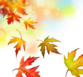 Beautiful Autumn Leaves — Stock Photo