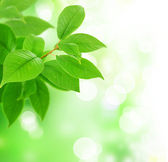 Beautiful Fresh Green Leaves — Stock Photo