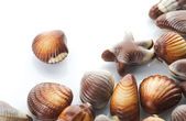Chocolate Seashells Over White — Stock Photo