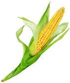 кукуруза на белом — Стоковое фото