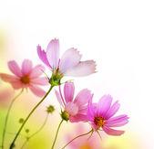 Mooie bloemen grens. ontwerp met bloemen — Stockfoto