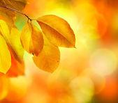 Autumn Abstract Background — Stock Photo