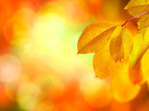 Autumn Abstract Background — Stock Photo