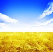 Beautiful Wheat Field — Stock Photo