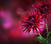 Dahlia Autumn flower design — Stock Photo