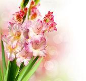 Gladiolus Autumn Flower Border Design — Stock Photo