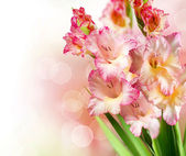 Gladiolus Autumn Flowers Border Design — Stock Photo