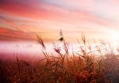 Dimmigt landskap. tidiga morgondimman — Stockfoto