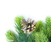 Christmas Evergreen Tree border over white — Stock Photo