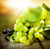 Grapes. Grapevine Over Vineyard Background — Stock Photo