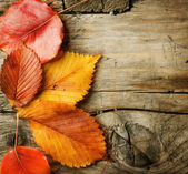 Autumn Leaves over wooden background. With copy space — 图库照片