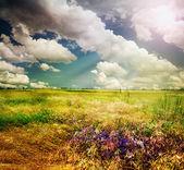 Beautiful Nature Rural Landscape — Stock Photo