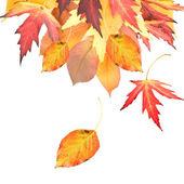 Autumnal Leaves Border — Stock Photo
