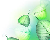 Beautiful Green Leaves Border. Floral Design — Stock Photo