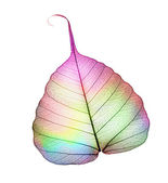 Colorful Abstract Leaf Over White — Stock Photo