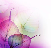 Floral Design. Leaves — Stock Photo