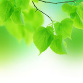 Fresh Spring Leaves — Stock Photo