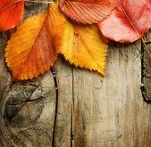 Las hojas de otoño sobre fondo de madera con espacio de copia — Foto de Stock