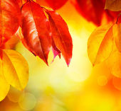 Fall.Autumn leaves — Stock Photo
