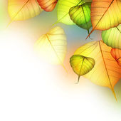 Autumn Leaves. Beautiful Abstract Fall Border — Stock Photo